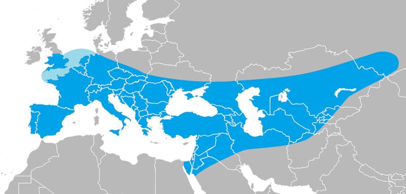 گسترهٔ Homo neanderthalensis. کرانههای شرقی و شمالی میتوانند تا کوههای اورال نیز گسترده باشند.