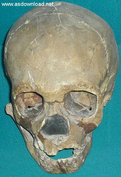 جمجمه یک پسر بچه نئاندرتال کشف شده در حفاری منطقه تشیک تاش