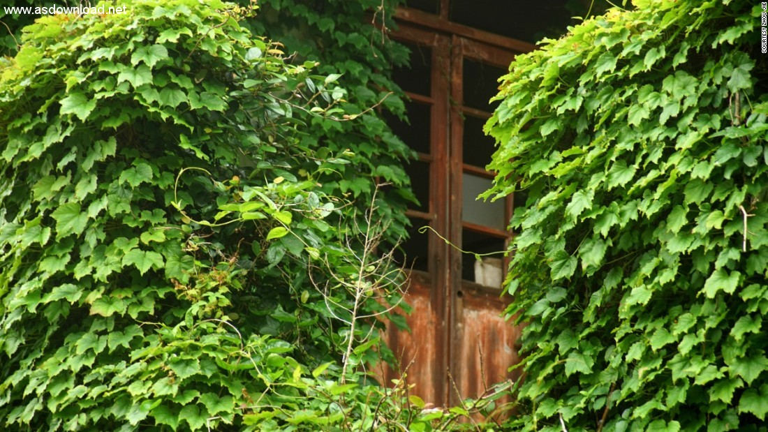 abandoned chinese village ivy vines (8)