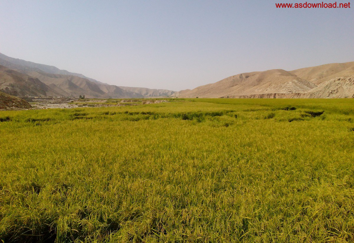 baghmalek-rice-fields-5