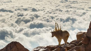 Photo of عکس های جالب از حیات وحش حیوانات