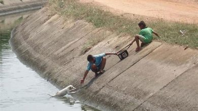 Photo of عکس هایی عجیب از نجات حیوانات