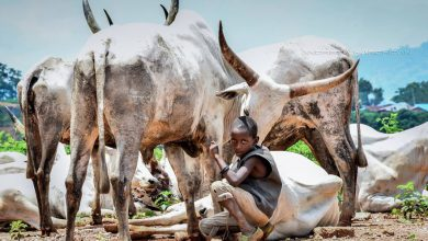 Photo of عکس های جالب از زندگی در آفریقا
