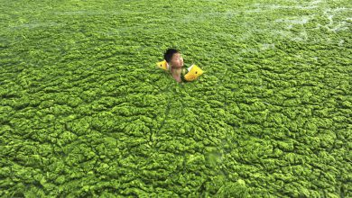 Photo of تصاویر تکان دهند از وضع محیط زیست در کشور چین
