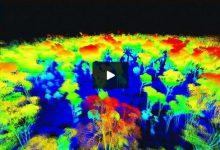 Photo of شیوه ای جدید برای تعیین میزان کربن درختان