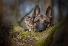 Photo of تصاویر جالب از رابطه دوستانه سگ و جغد