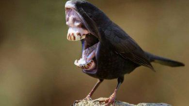 Photo of تصاویر جالب از میکس پرندگان با حیوانات