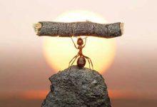 Photo of راه های تقویت اراده چیست؟
