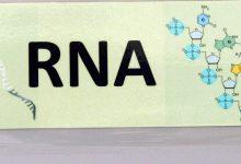 Photo of رمزگشایی از مولکول «آر ان ای» برای مبارزه با سرطان