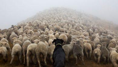 Photo of سخت کارترین سگ های جهان + عکس