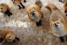 Photo of عکس هایی از دهکده روباه ها