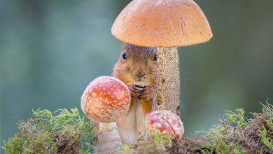 Photo of تصاویر جالب از یک سنجاب