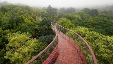 Photo of زیباترین پیاده روی جهان برفراز جنگل در شهر کیپ تاون آفریقای جنوبی