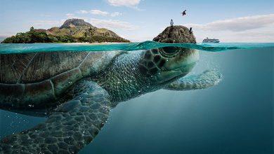 Photo of جاذبه های دیدنی اکوادور بر پشت حیوانات دریایی + عکس