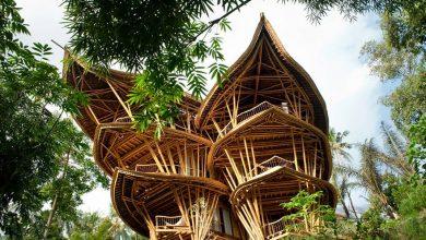 Photo of تصاویر خانه فوق العاده زیبا با چوب بامبو