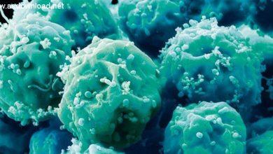 Photo of سلولهایی که میتوانند در آینده شما را نجات دهند!