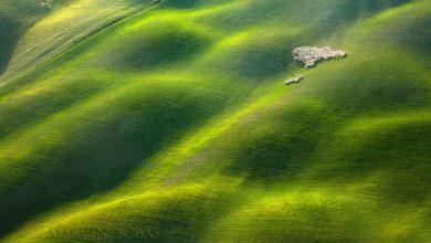 Photo of گله داری در مراتع زیبای توسکانی ایتالیا