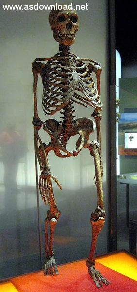 1-Neanderthalensis