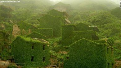 Photo of روستایی در چین که بوسیله پیچک انگور محاصره شده + عکس