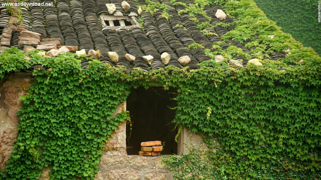 abandoned chinese village ivy vines (9)