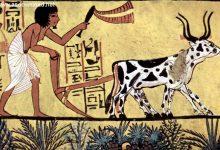 Photo of تاریخ پیدایش کشاورزی باز هم تغییر کرد!