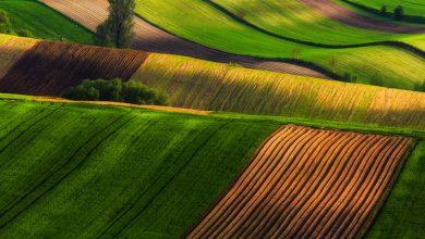 Photo of عکس های از زیباترین مزارع کشاورزی در اروپا