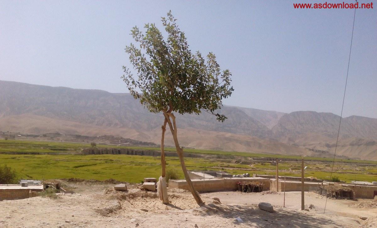 baghmalek-rice-fields-1