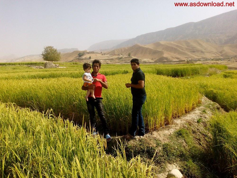 baghmalek-rice-fields-11