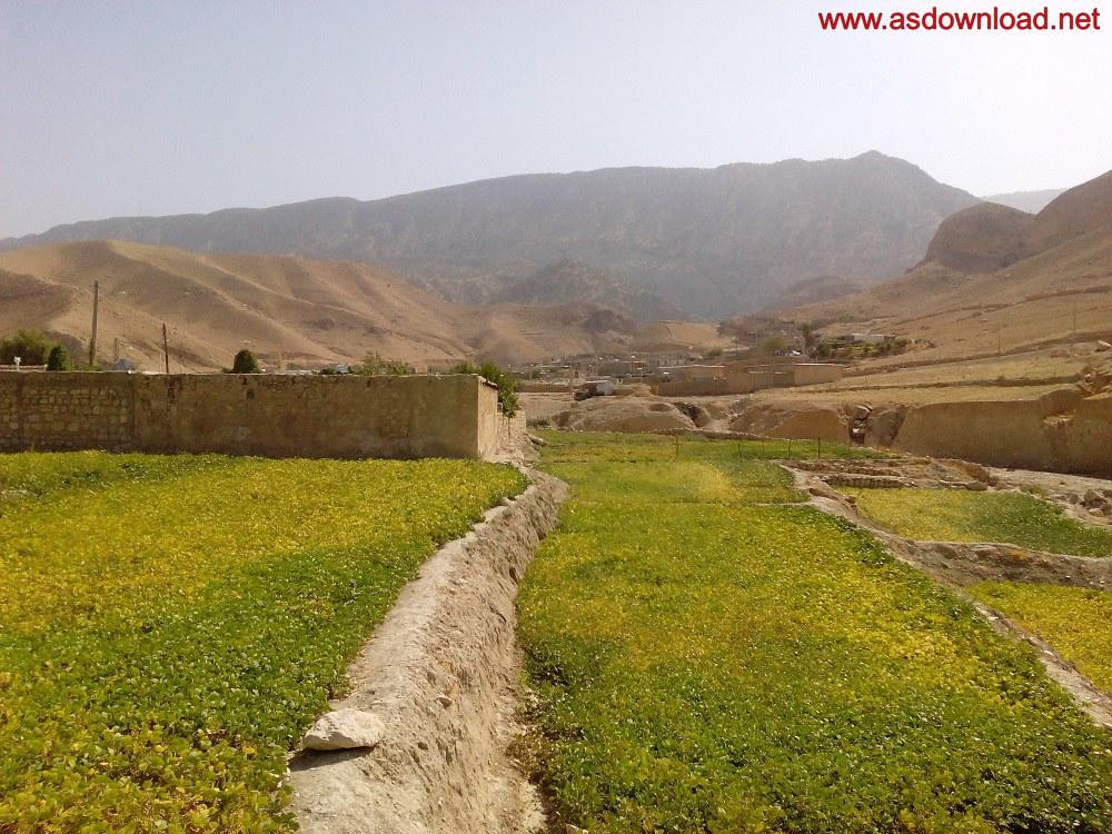 baghmalek-rice-fields-15