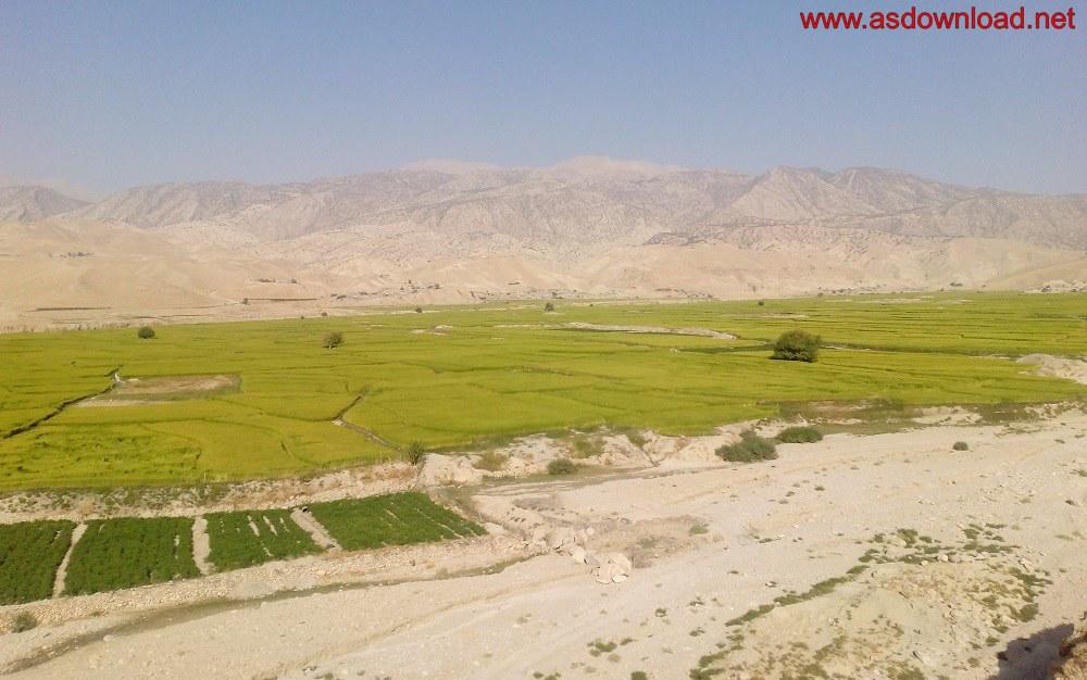 baghmalek-rice-fields-17