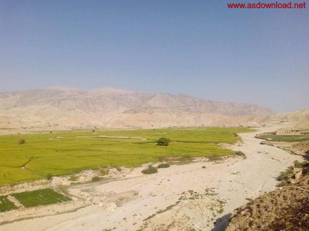 baghmalek-rice-fields-18