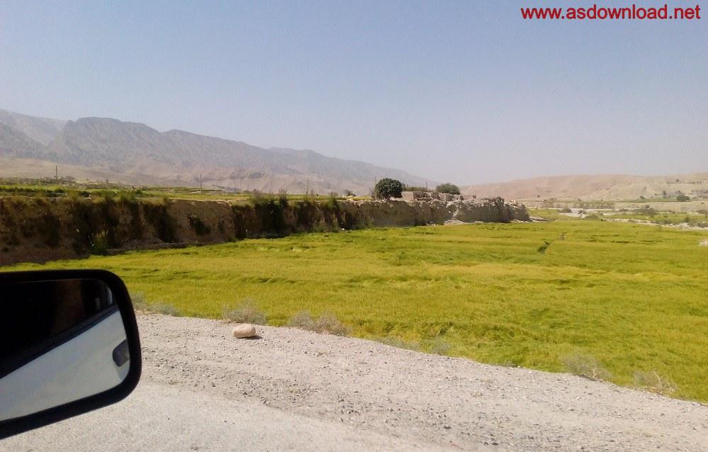 baghmalek-rice-fields