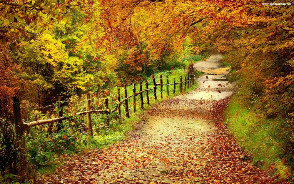 country-road-hd-wallpaper-9-copy
