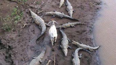 تصاویر جالب از بی خیالی حیوانات