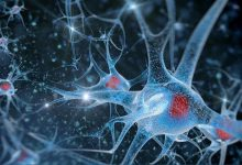 Photo of افزایش طول عمر انسان با تغییر سلول های بنیادی مغز