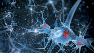 افزایش طول عمر انسان با تغییر سلول های بنیادی مغز