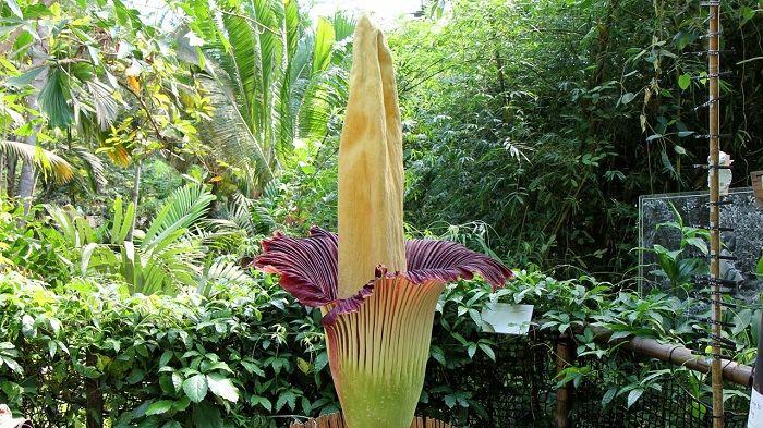 بدبو ترین گل جهان را بشناسید!