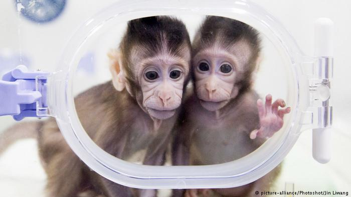 رونمایی از نخستین میمیون شبیه سازی شده و بدون والدین در چین