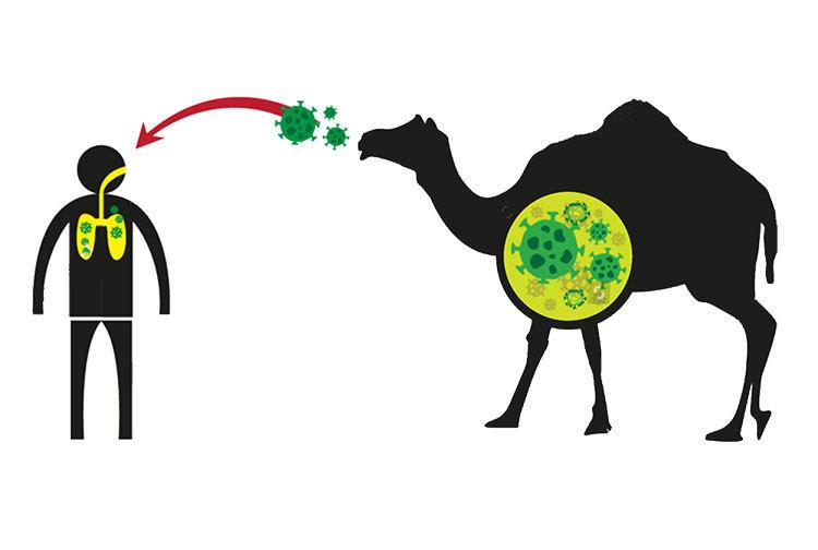 کدام حیوان ویروس کرونا را به انسان انتقال داد؟