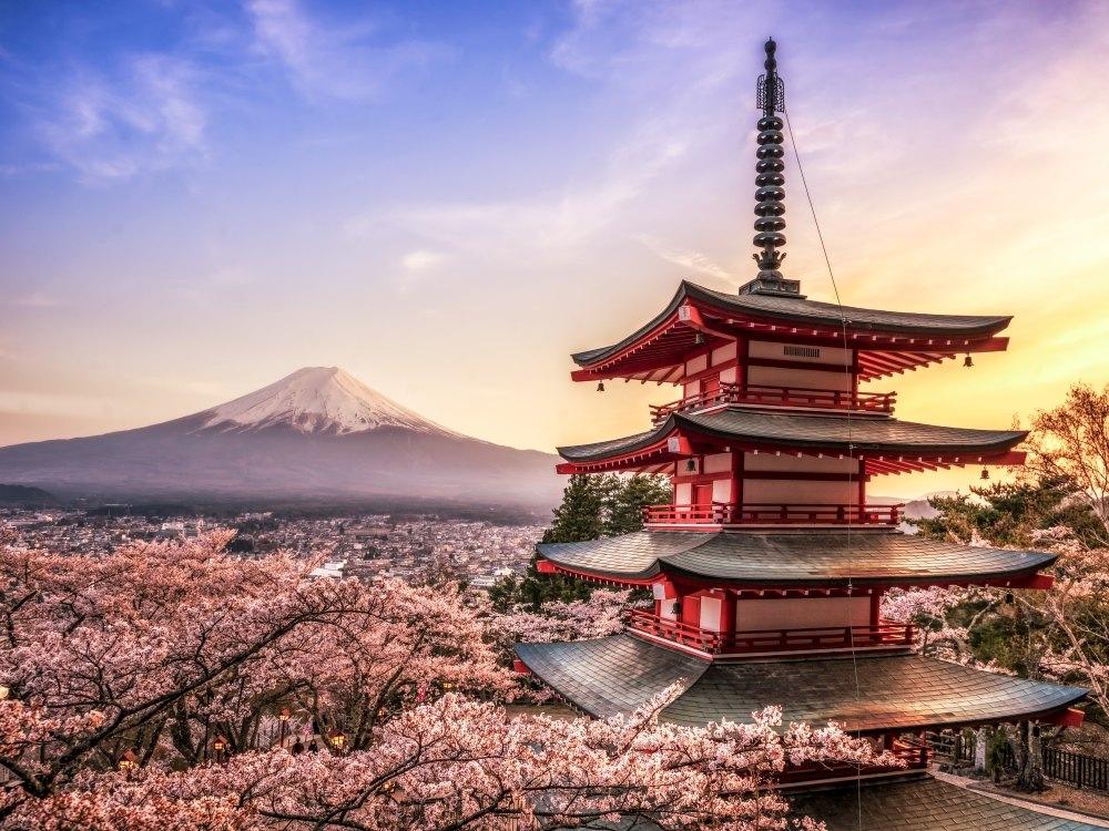 ژاپن: برای شکوفه های زیبای گیلاس