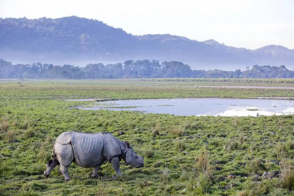 پارک ملی کازیرانگا ، هند