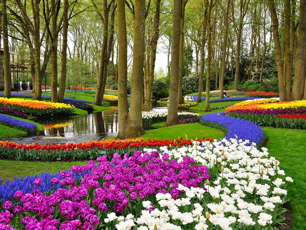 باغ Keukenhof - افتخار هلند