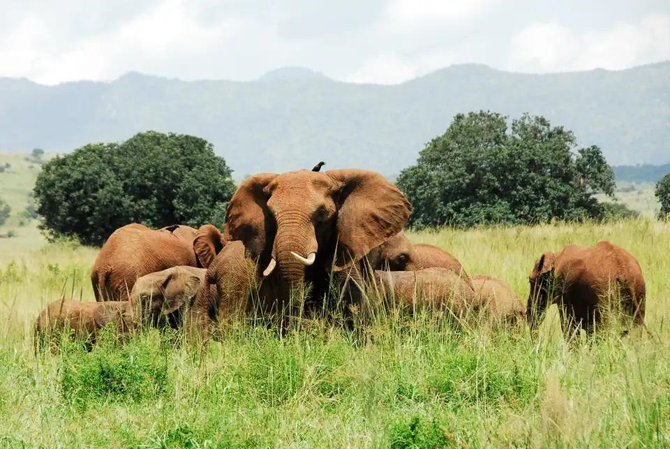 پارک ملی Kidepo Valley ، اوگاندا