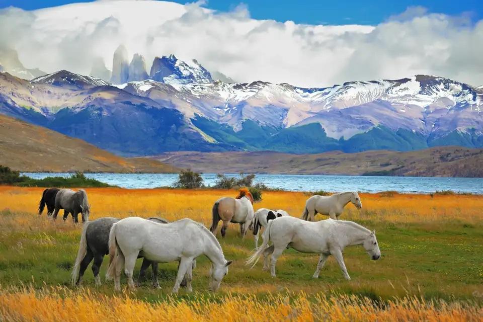 پارک ملی تورس دل پاین ، شیلی / آرژانتین