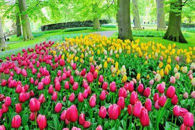 Photo of Keukenhof زیباترین باغ گل در جهان
