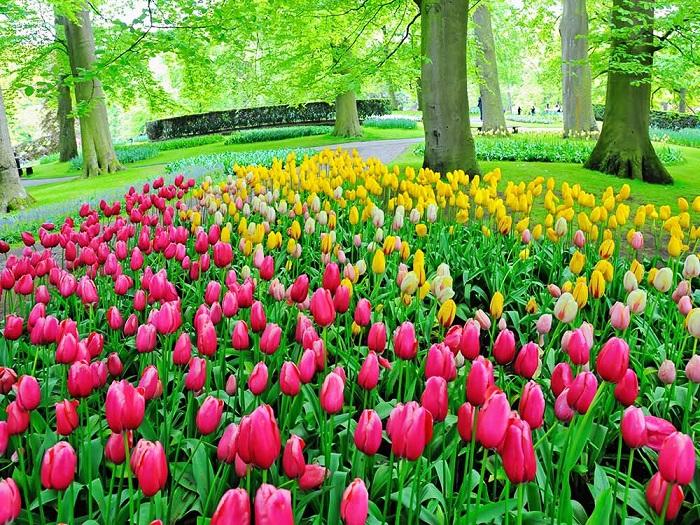 Keukenhof زیباترین باغ گل در جهان