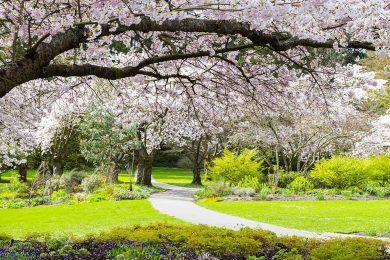 Photo of 15 مکان دیدنی برای دیدن شکوفه های زیبای گیلاس