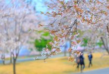 Photo of 7 مکان زیبا برای دیدن شکوفه های گیلاس