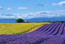 Photo of 10 دلیل برای سفر به فرانسه