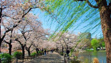Photo of جاذبه های گردشگری برتر توکیو